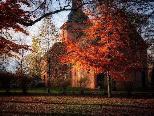 建造, 教會, 楓葉, 樹木 的 免費圖庫相片