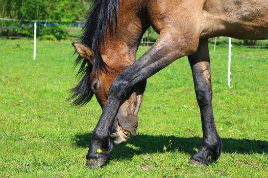 Brown and Black Horse on Green Grass Field