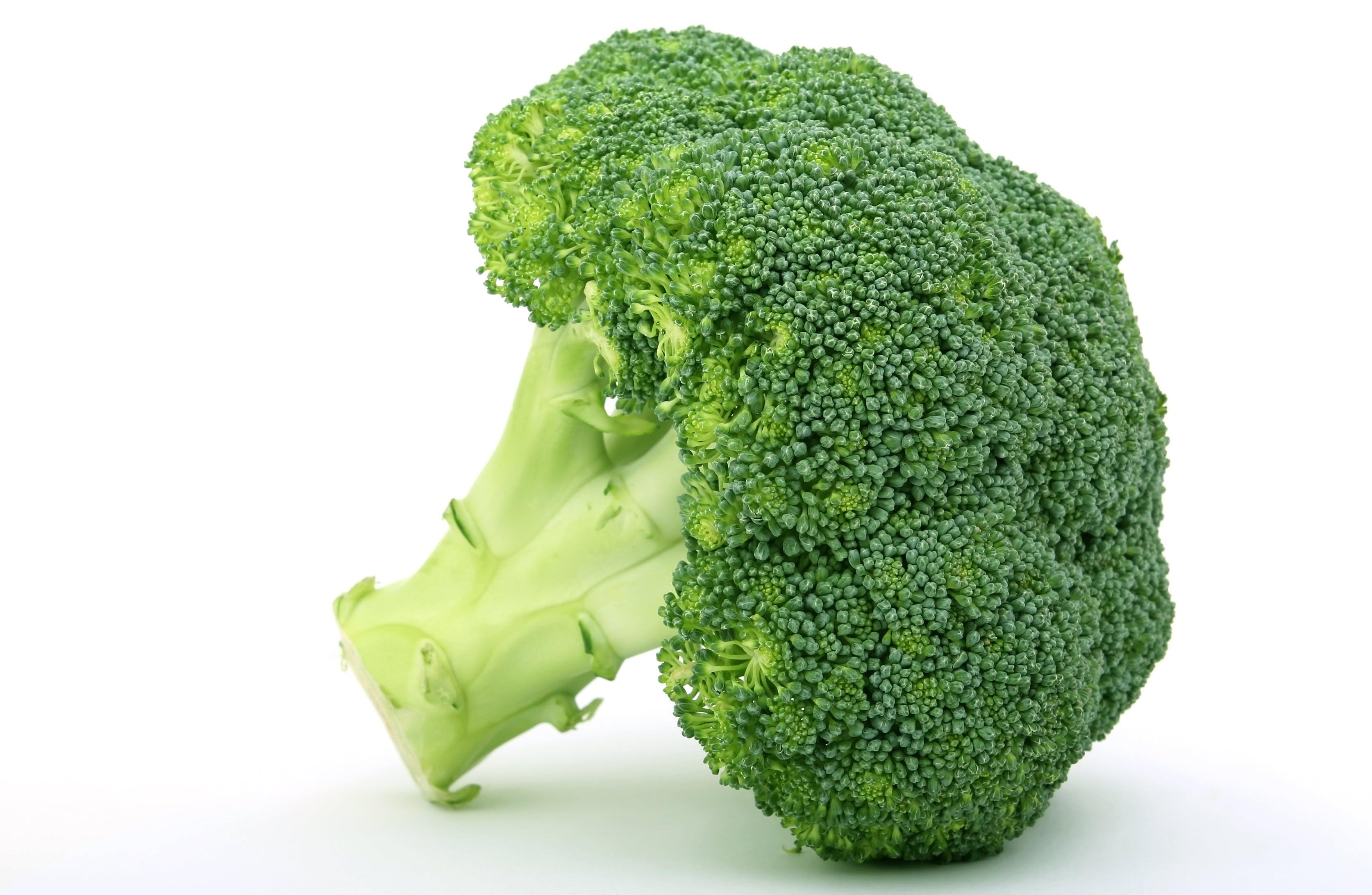 Free stock photo of appetite, broccoli, brocoli broccolli, calories
