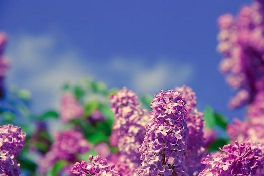 Purple Petal Flower on Tilt Shift Photo during Daytime