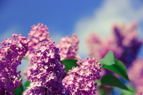 Безкоштовне стокове фото на тему «великий план, завод, квіти, макрофотографія»
