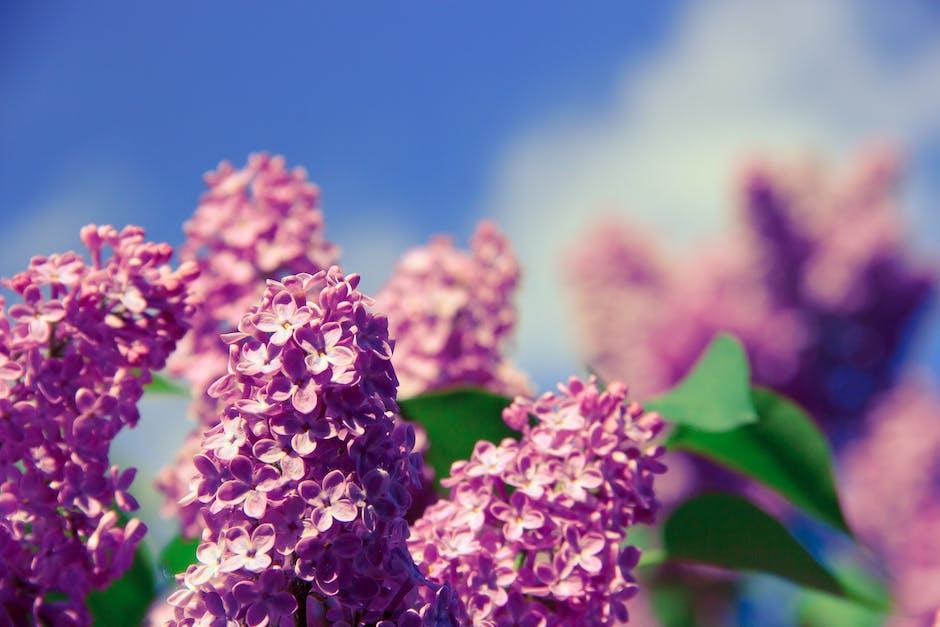 New free stock photo of flowers, plant, macro