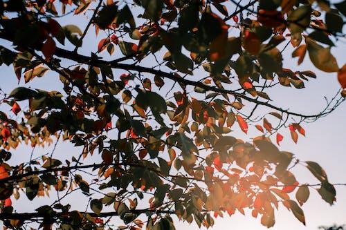 Schattenbildfotografie Von Blättern