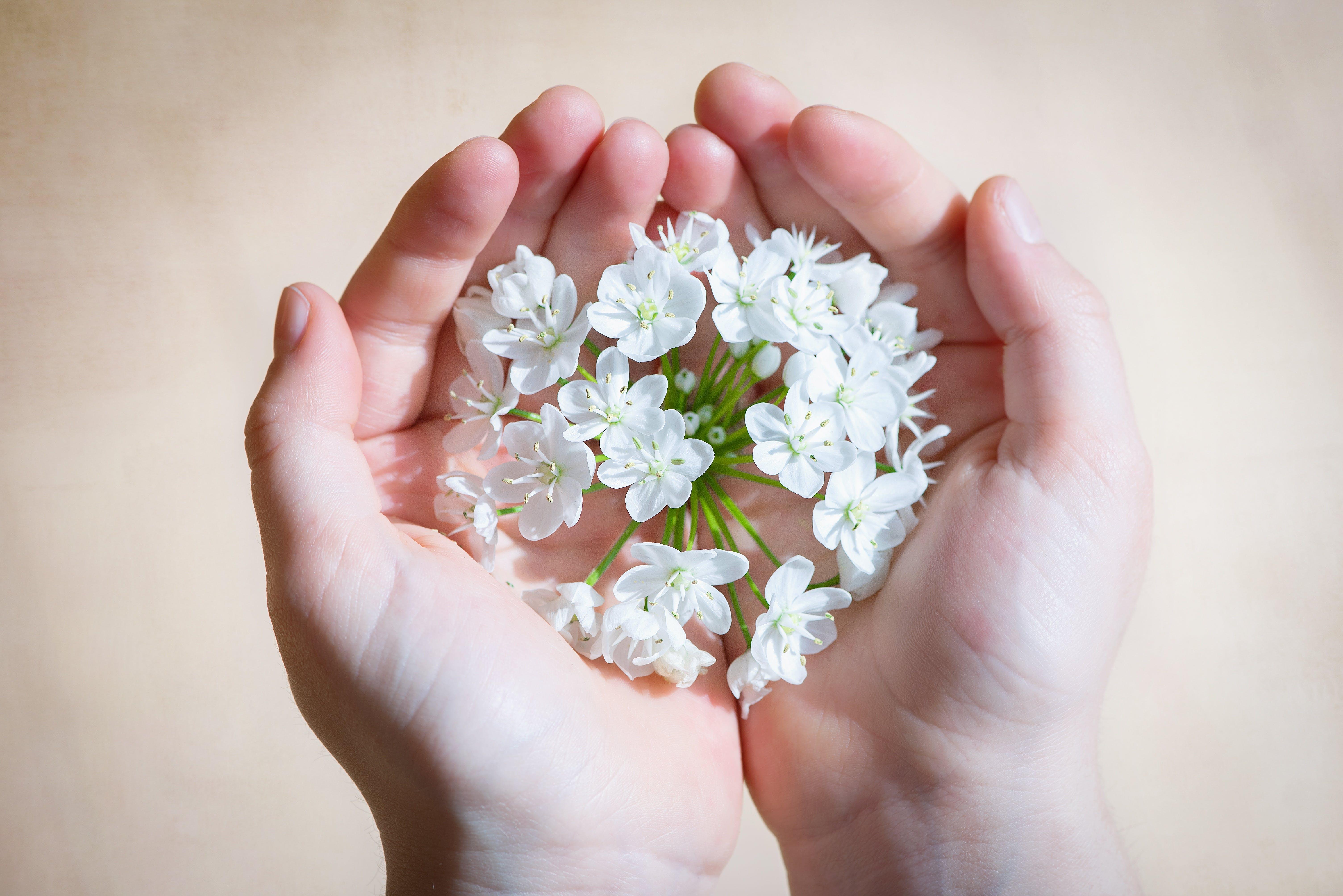White Flower on Human Hands