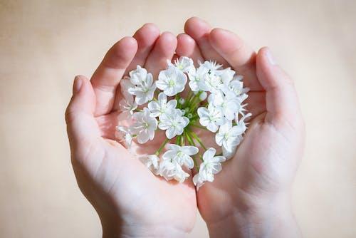 Белый цветок на руках человека
