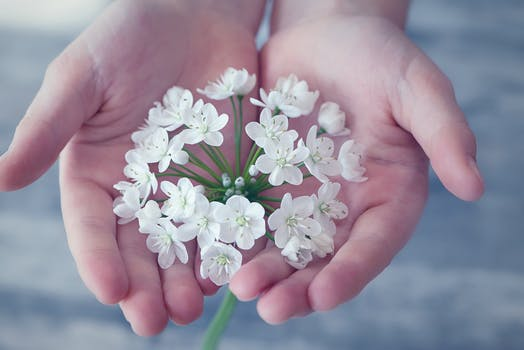 1000 amazing flower in hand photos pexels free stock photos shallow focus photography of white flower mightylinksfo