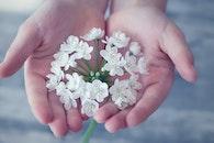 hand, flowers, blur