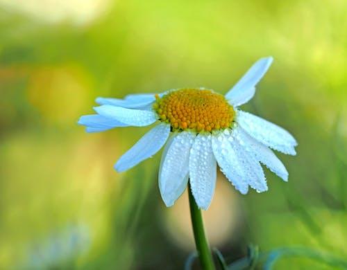 Foto d'estoc gratuïta de concentrar-se, desenfocament, flor, flor silvestre