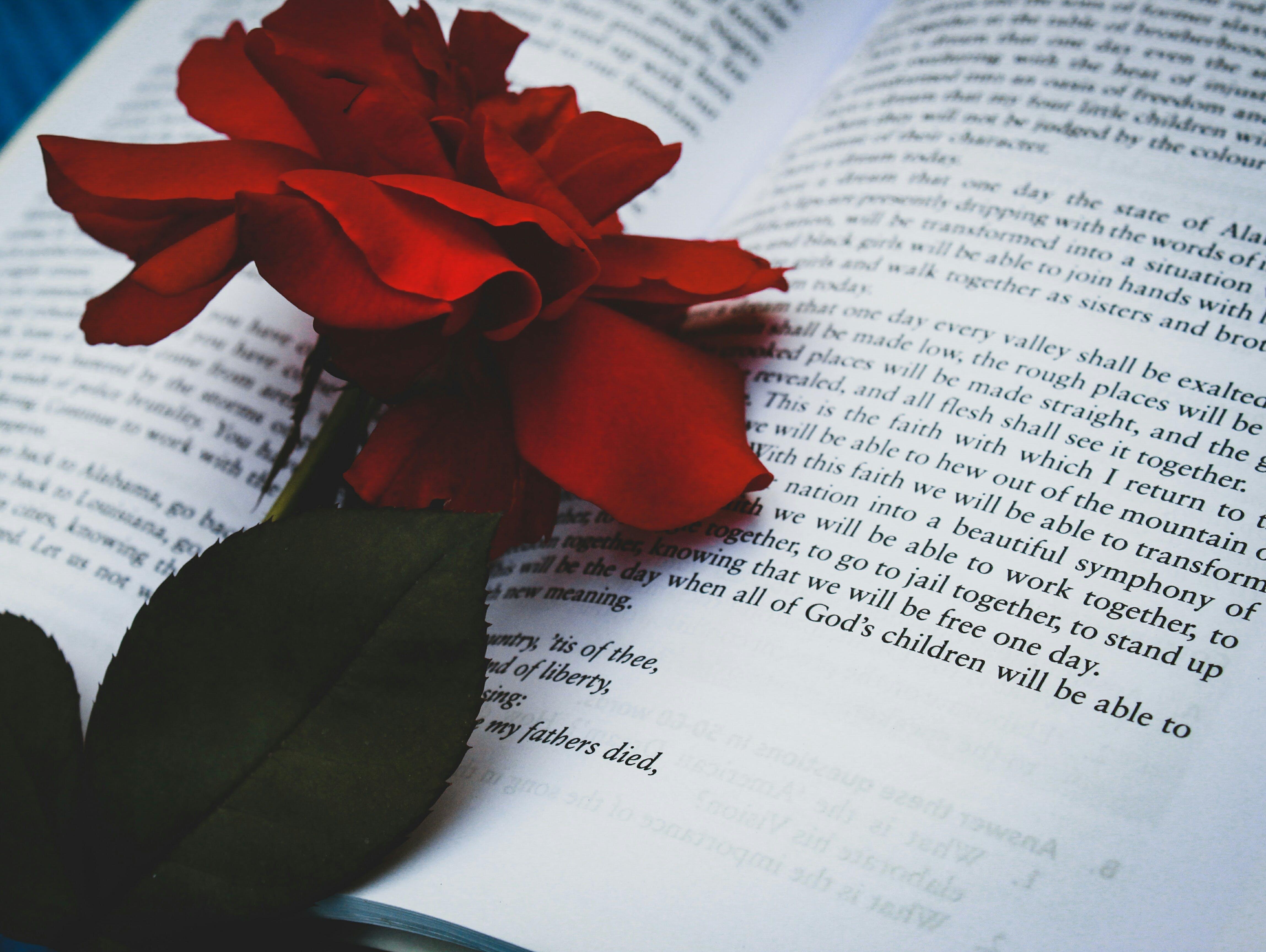 Free stock photo of 4k wallpaper, beautiful flowers, blurred, book