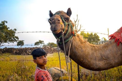 Free stock photo of animal, animal tamer, arabian