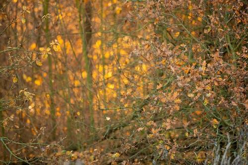 Free stock photo of nature, orange background, orange leaves