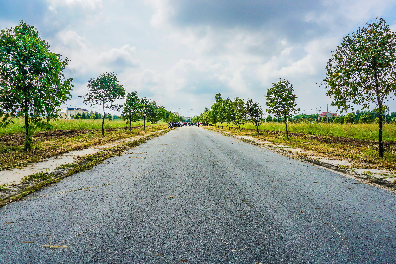 asphalt, autobahn, bäume