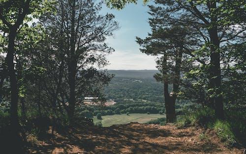Gratis stockfoto met bomen, daglicht, fel, groen