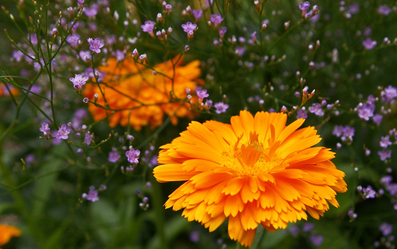Imagine de stoc gratuită din adâncime de câmp, floră, flori, iarbă