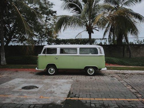 Immagine gratuita di alberi, automobile, bianco, classico
