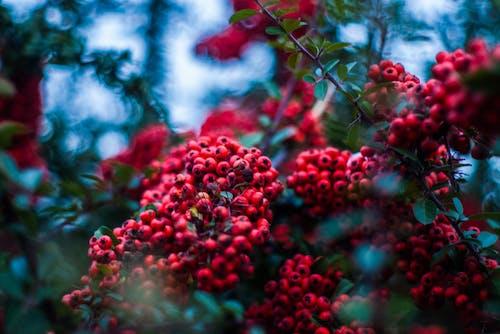 Gratis lagerfoto af bjergaske, busk, close-up, dybde