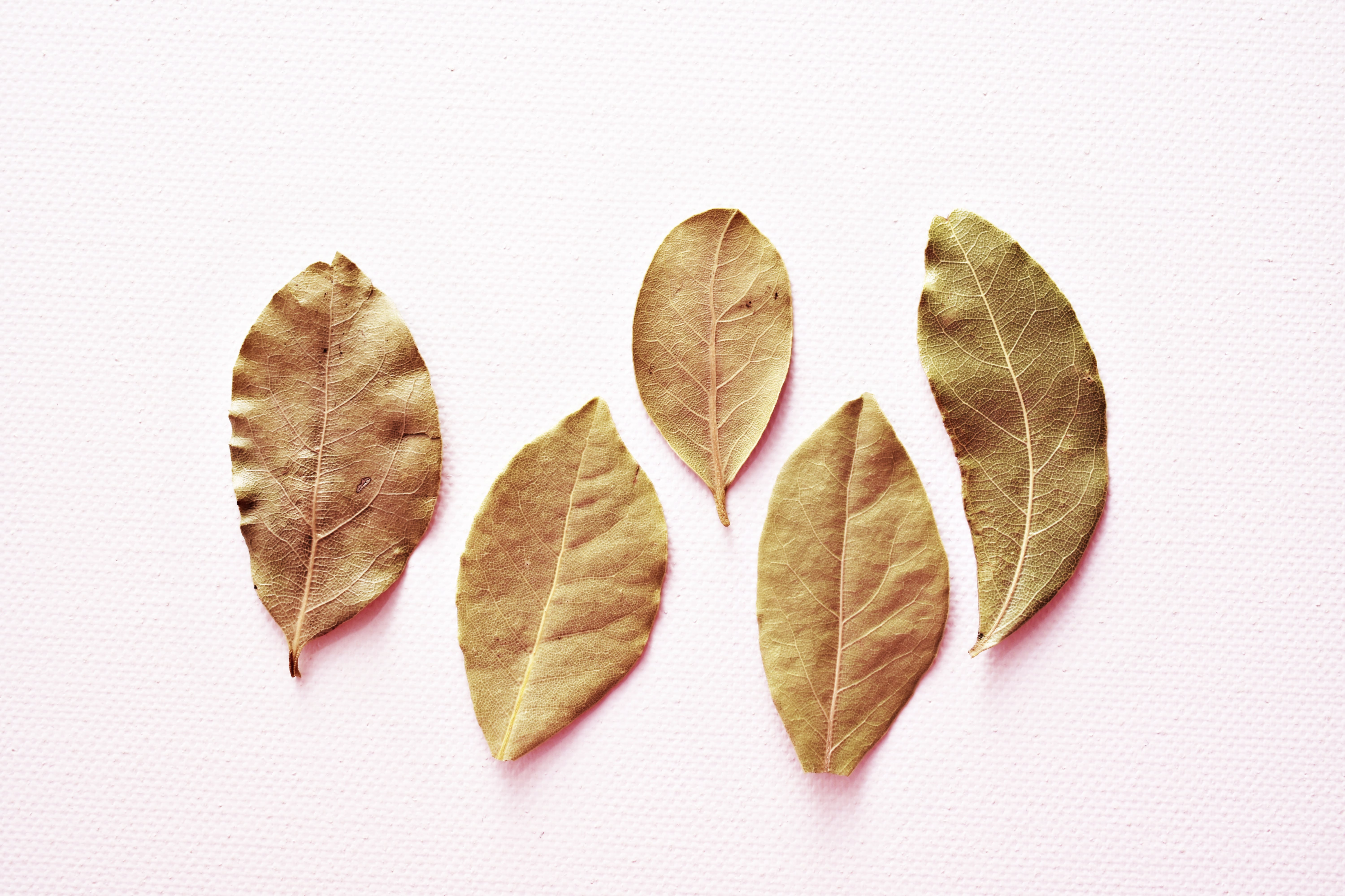 Five Oval Brown Leaves