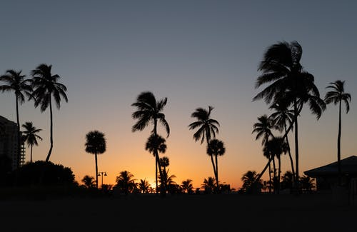 Silhouette Photography of Coconut Trees