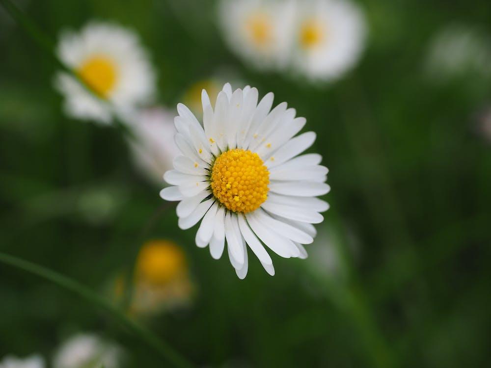 barva, bílá, flóra