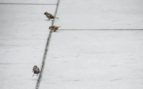 คลังภาพถ่ายฟรี ของ การกระโดด, นกกระจอก