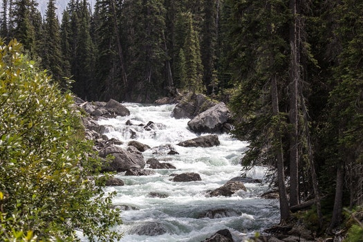 River Stream Inbetween Green Trees