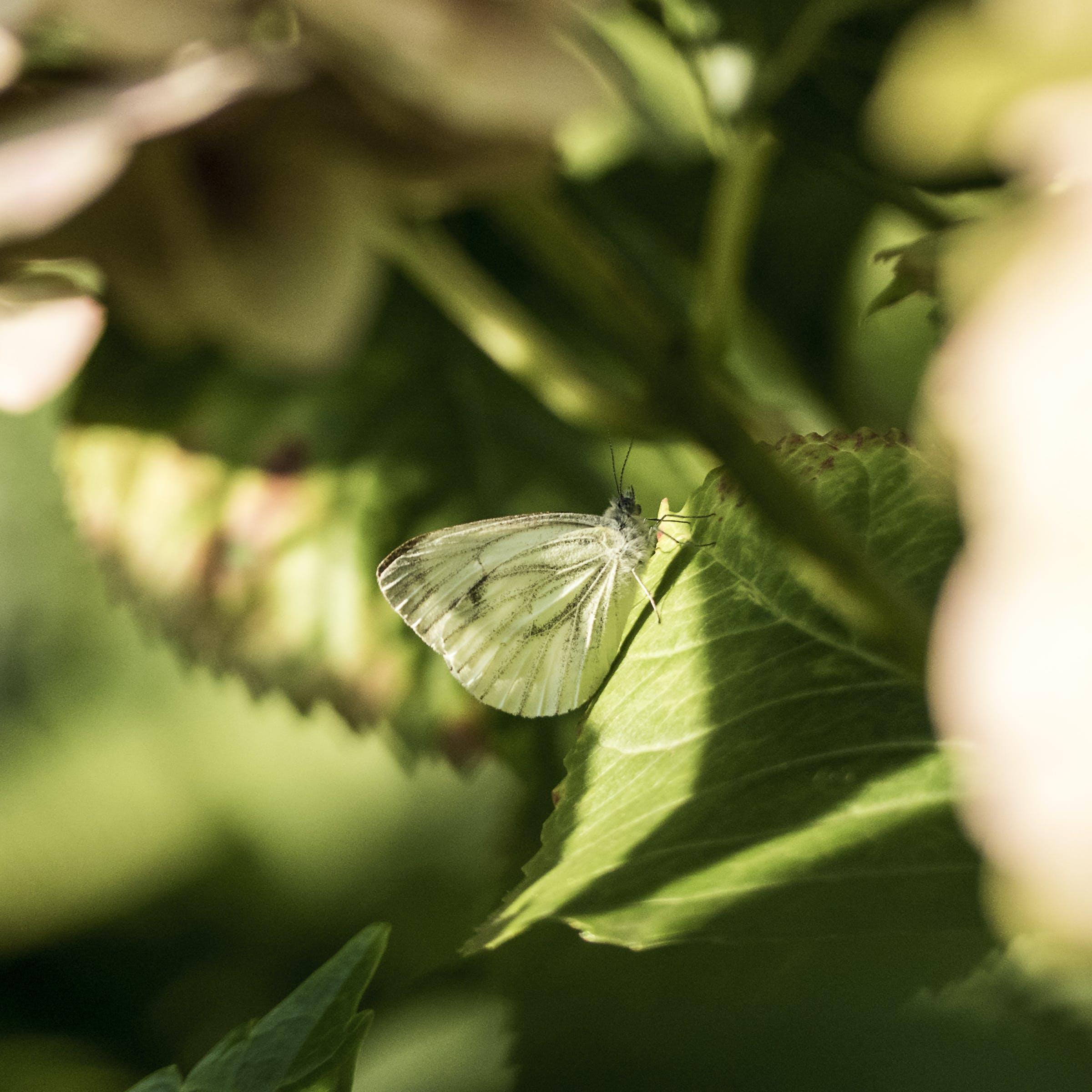 Gratis lagerfoto af hvid sommerfugl, sommerfugl