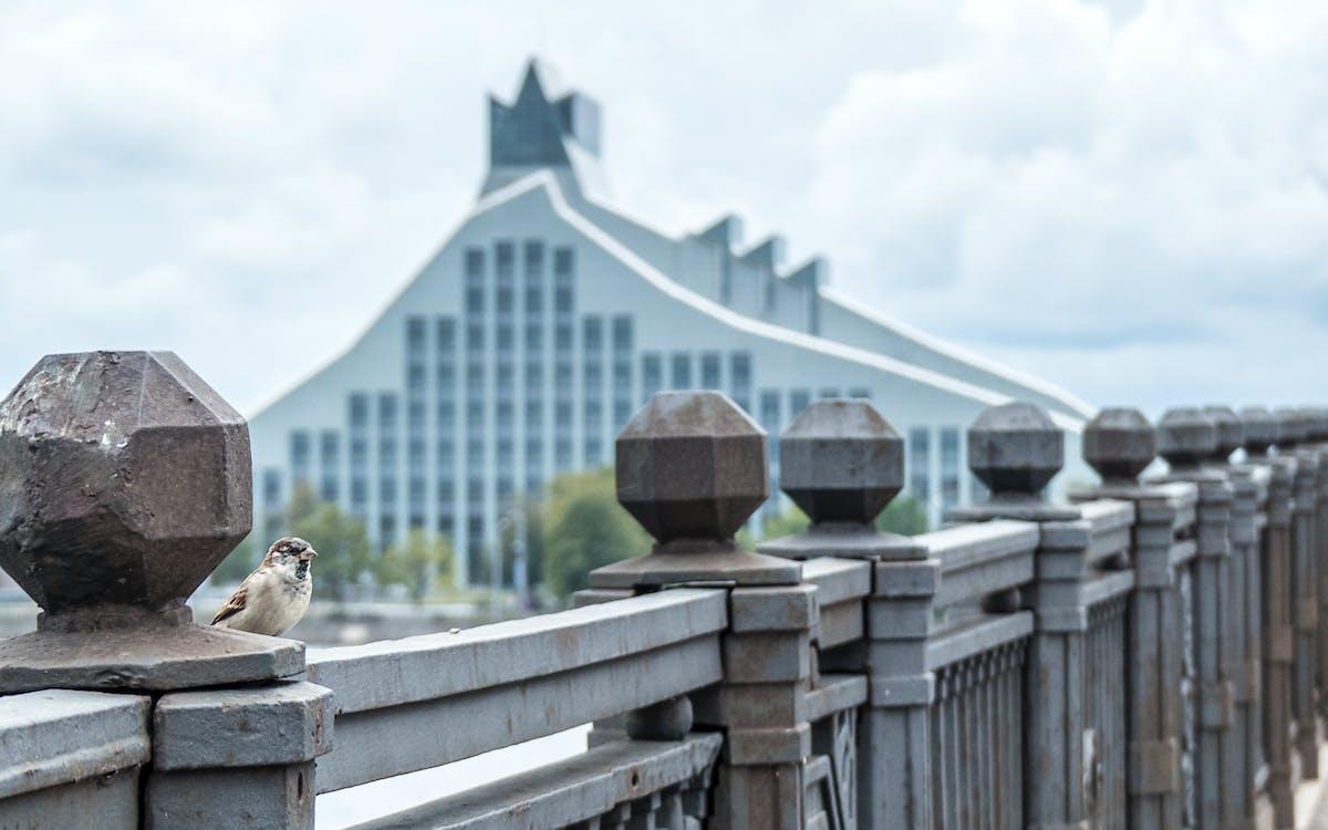 moderná budova, most, vrabec
