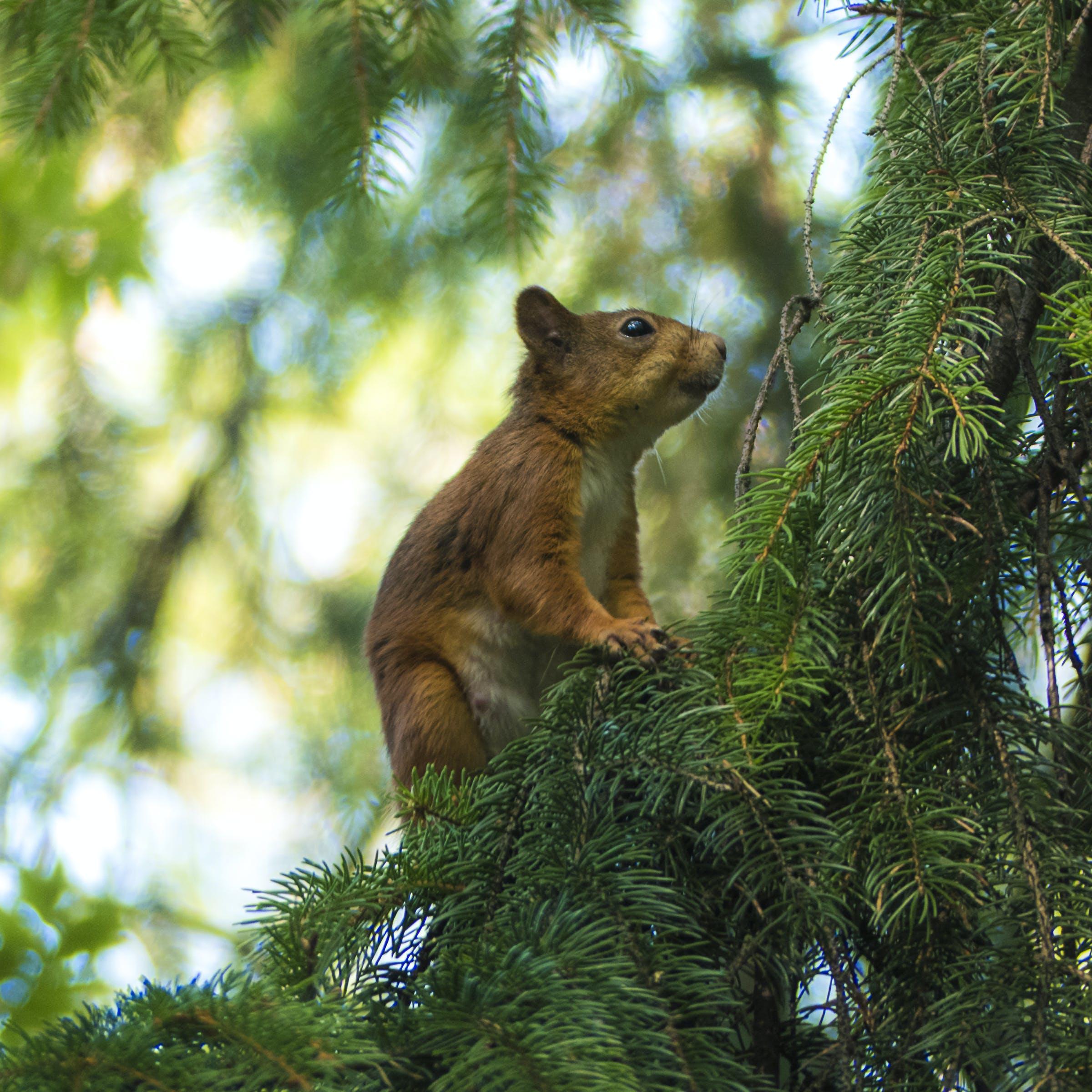 Δωρεάν στοκ φωτογραφιών με άγρια φύση, άγριος, βλέπω, γκρο πλαν