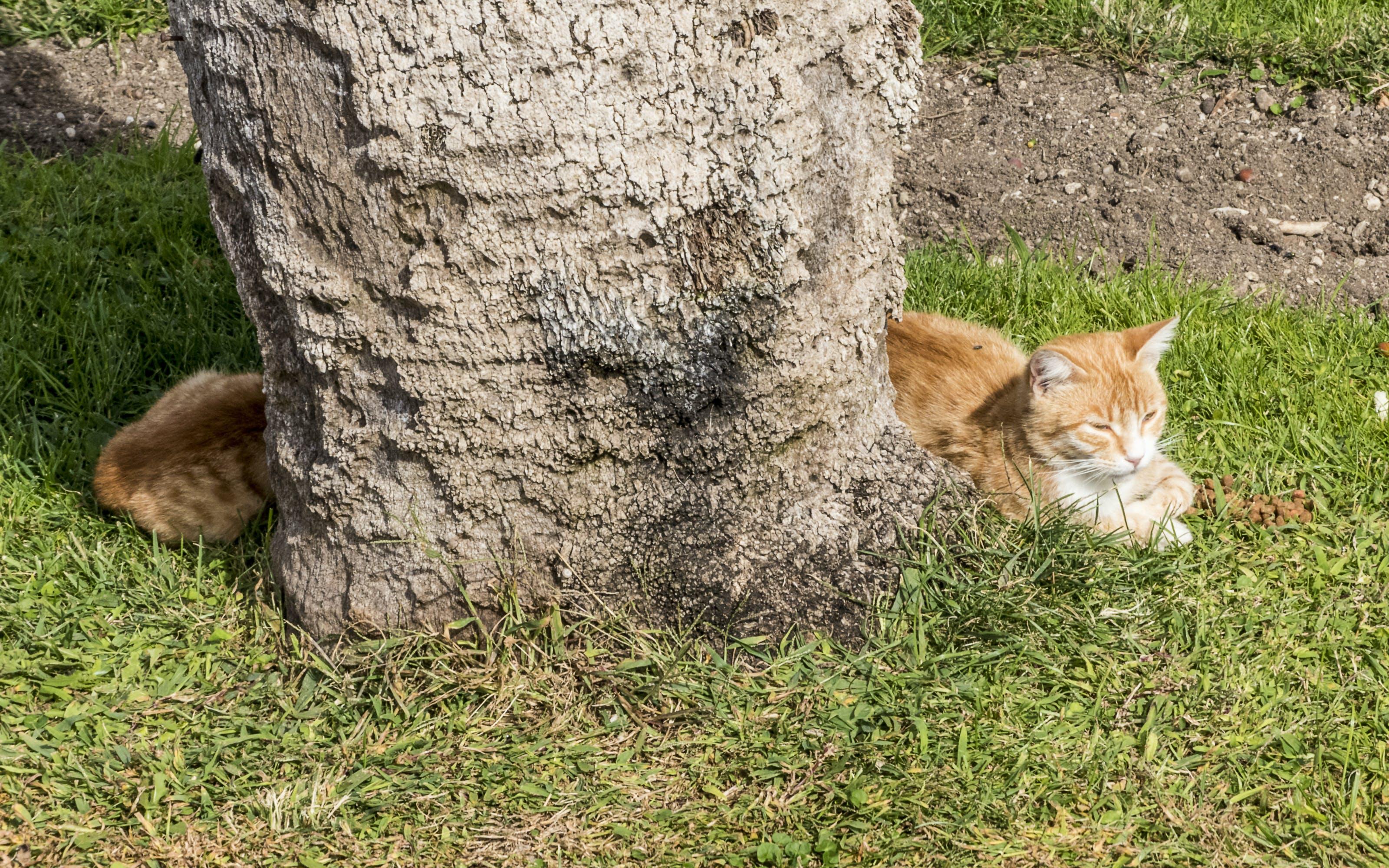 Δωρεάν στοκ φωτογραφιών με Γάτα, μακρύ σώμα, οφθαλμαπάτη