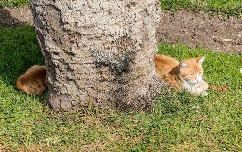 Foto profissional grátis de corpo longo, gato, ilusão de óptica