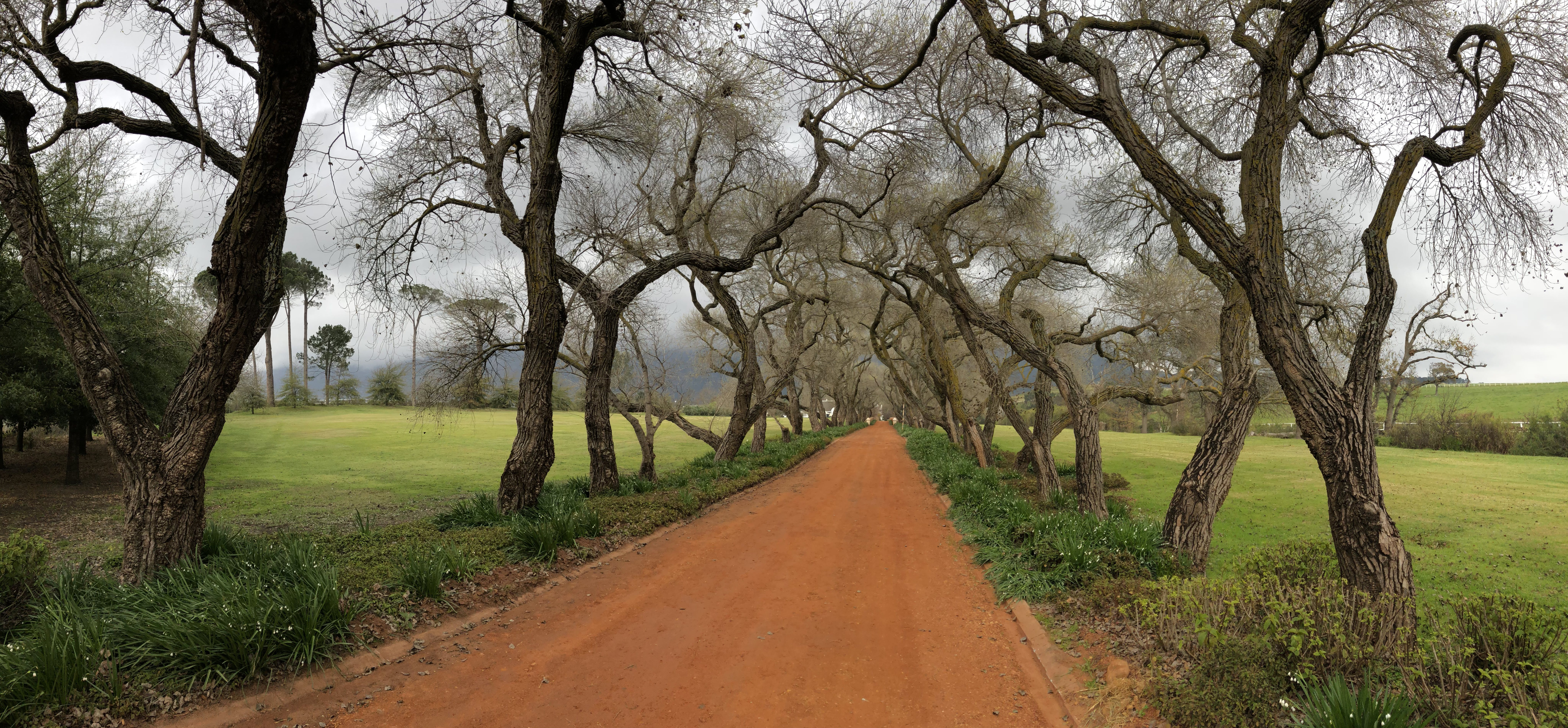 Free stock photo of landscape, road, south africa, trees