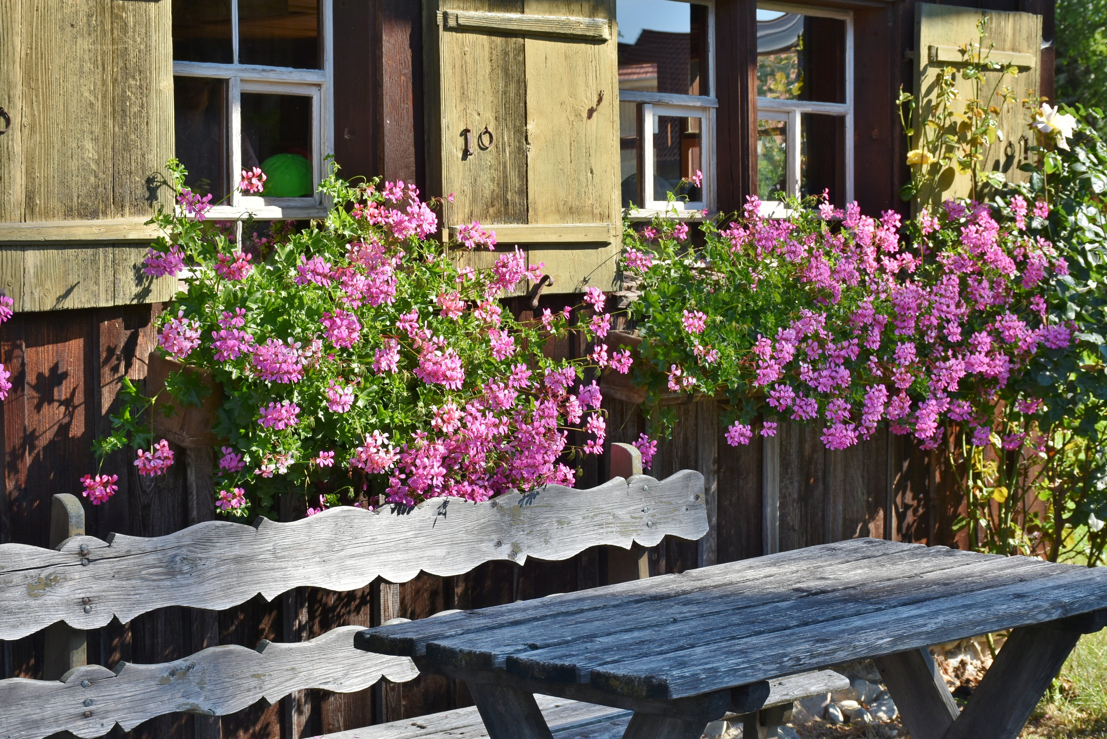 Pink Flowering Plant Behind Brown Wooden Bench