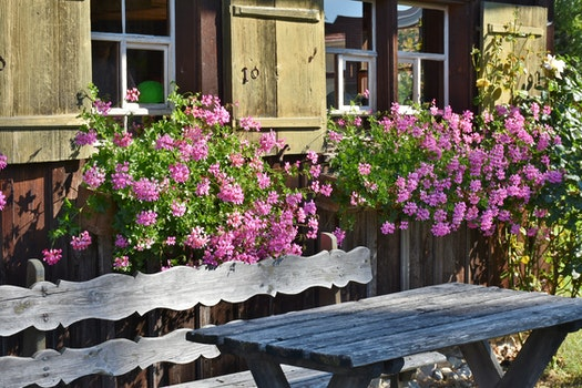 Pink Flowering Plant Behind Brown Wooden Bench