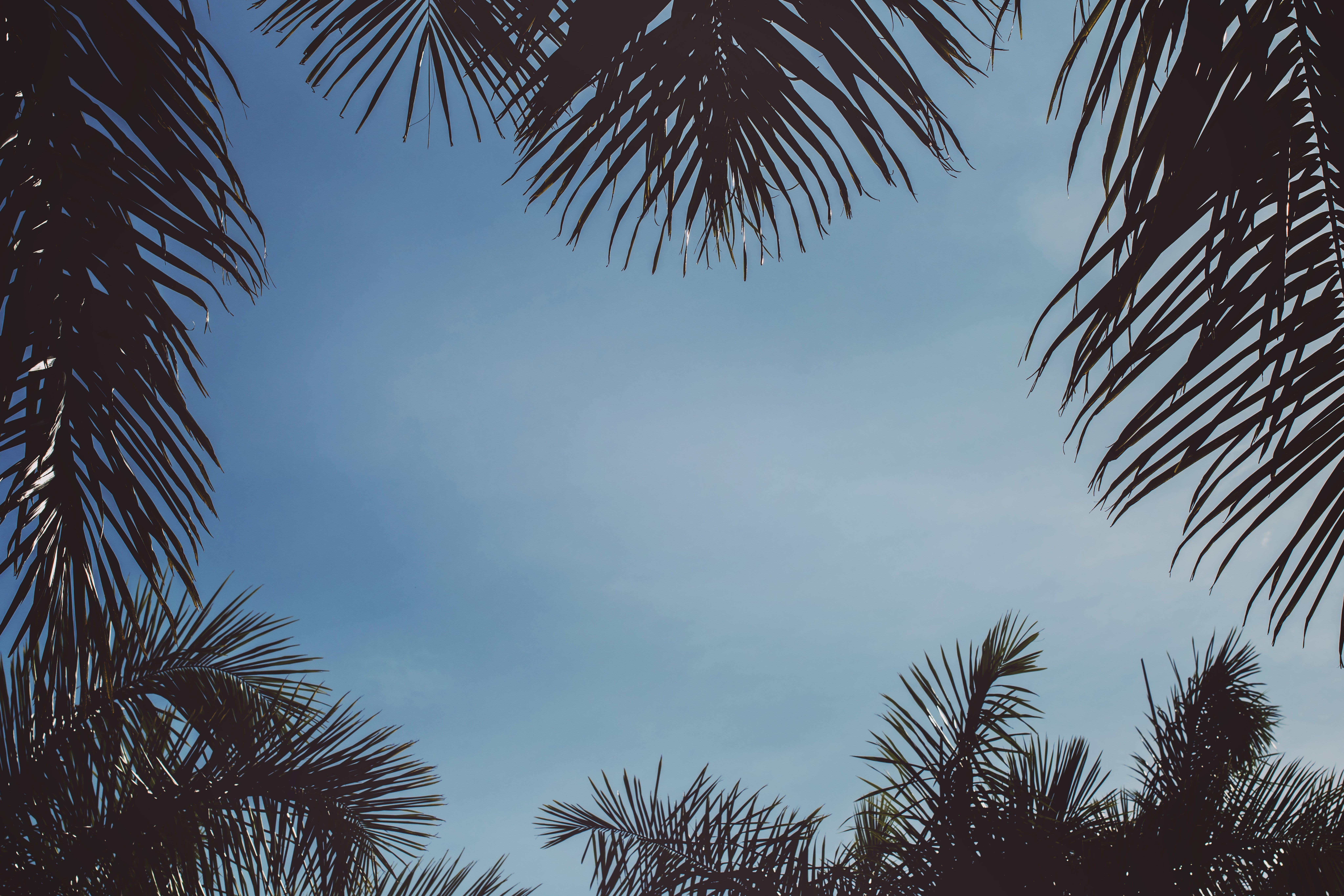 Foto stok gratis langit, langit cerah, permen berwarna, siang hari