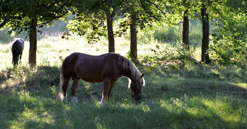 Free stock photo of horse, image, nature, photo