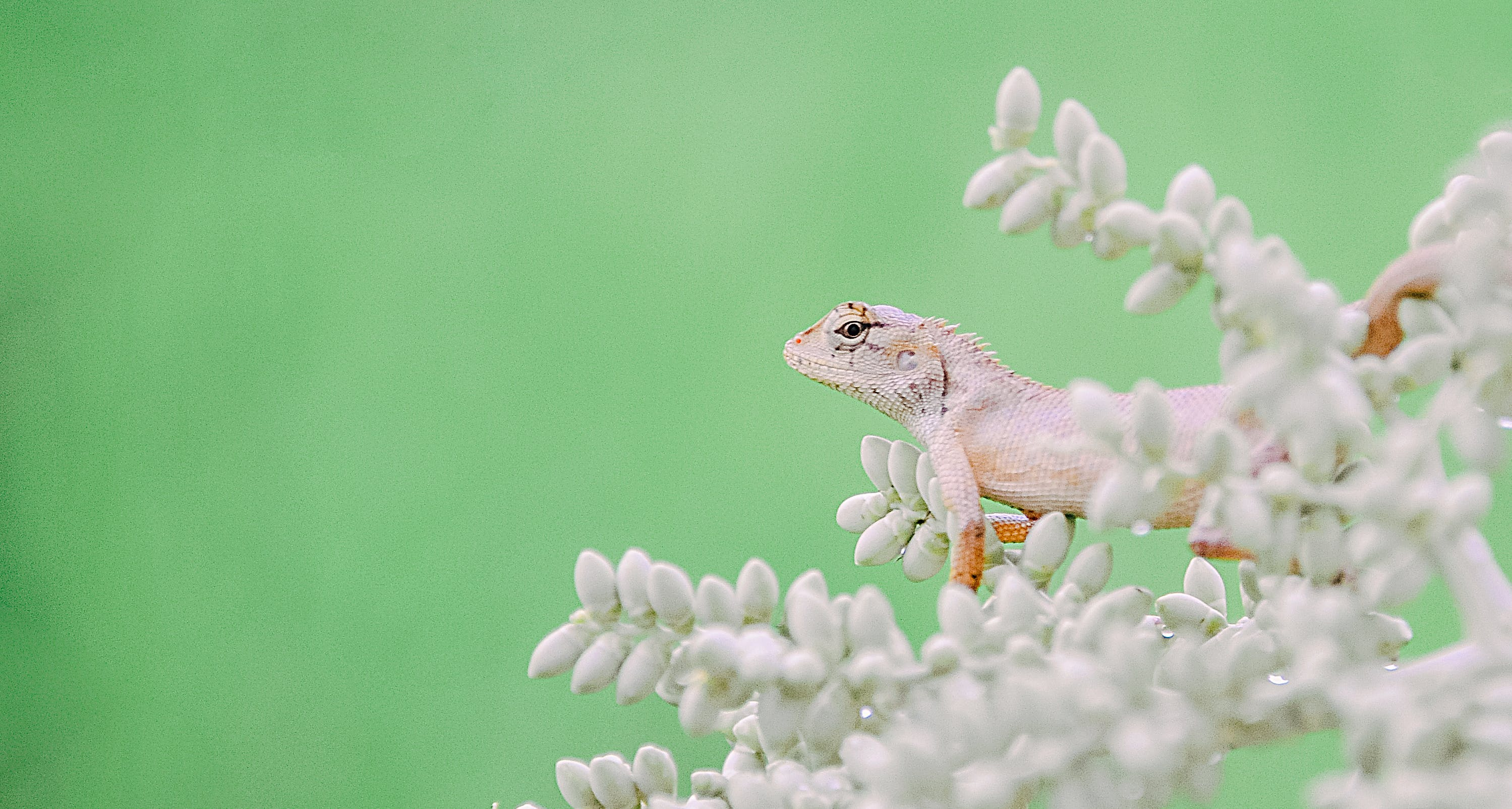 Gray Lizard on Green Plant