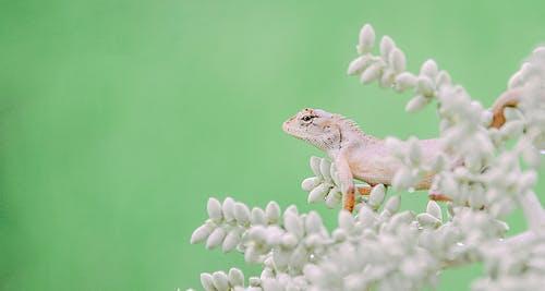 Gray Lizard on Green Plant