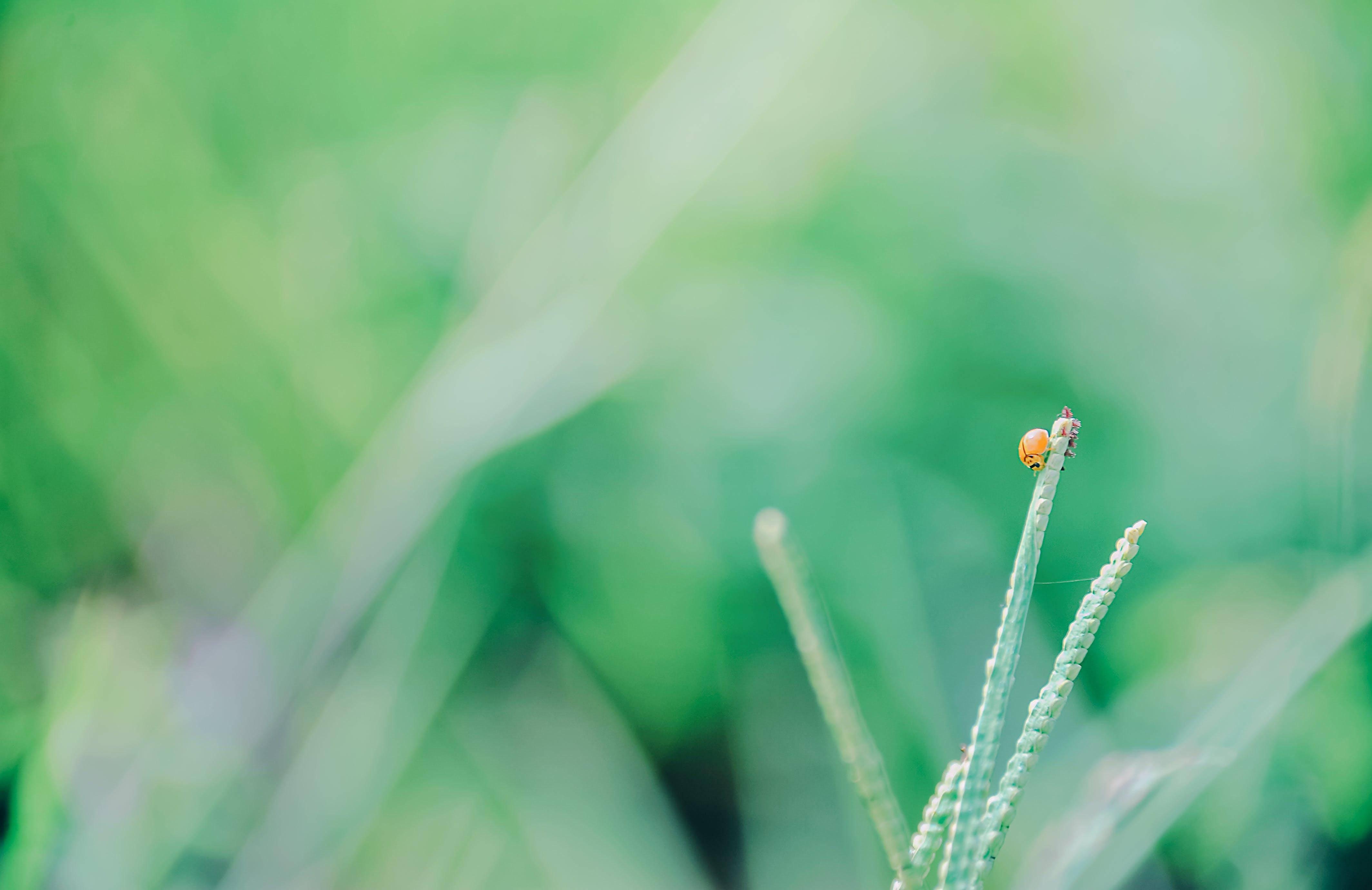 Selective Focus Photography Of Yellow Ladybug On Green Grass