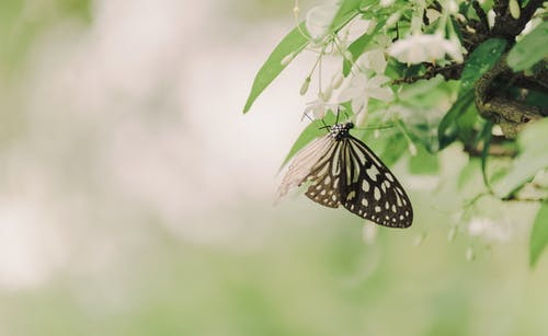 Immagine gratuita di ali, ambiente, animale, boccioli di fiori