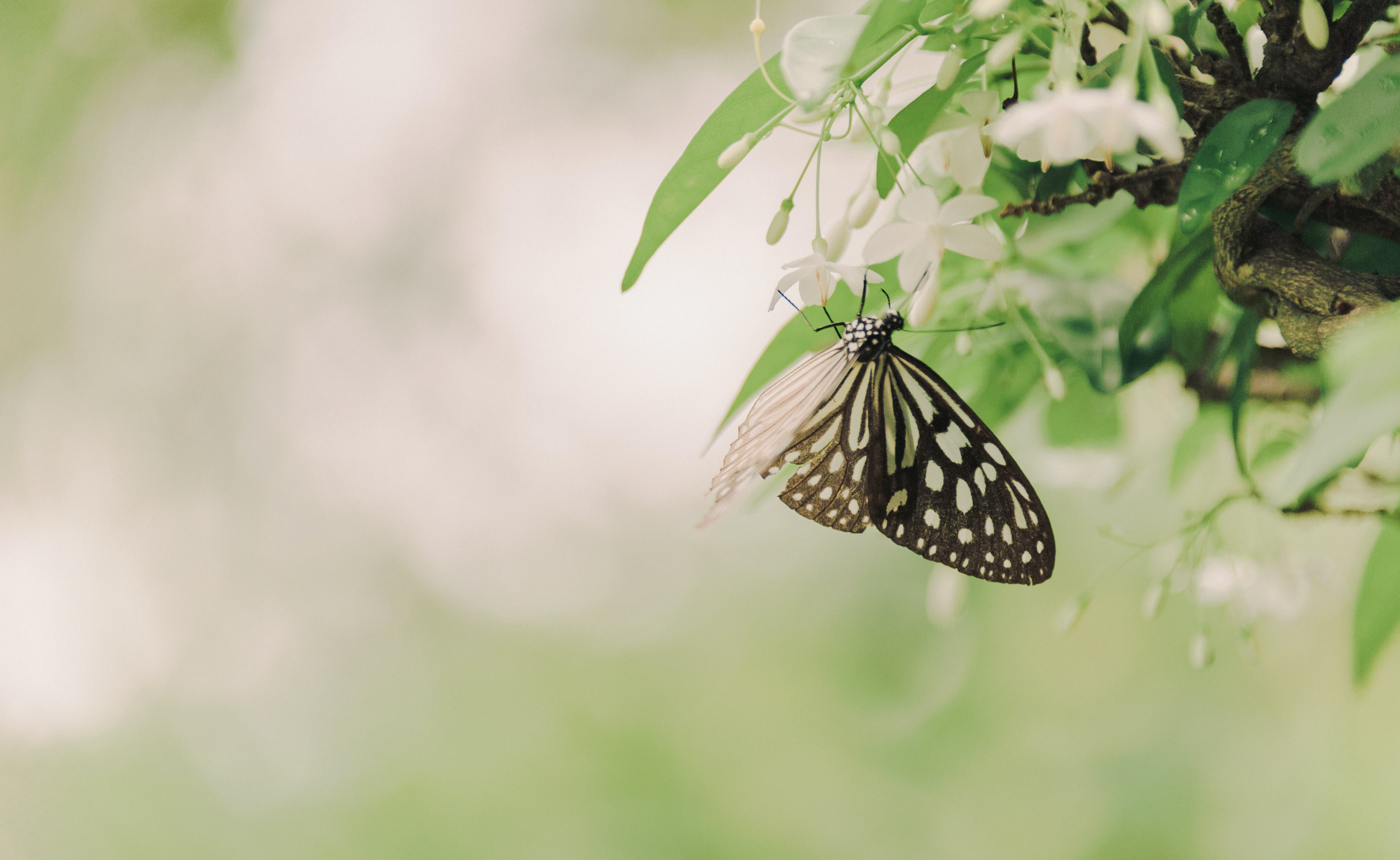 black and white butterfly on brown tree branch  u00b7 free