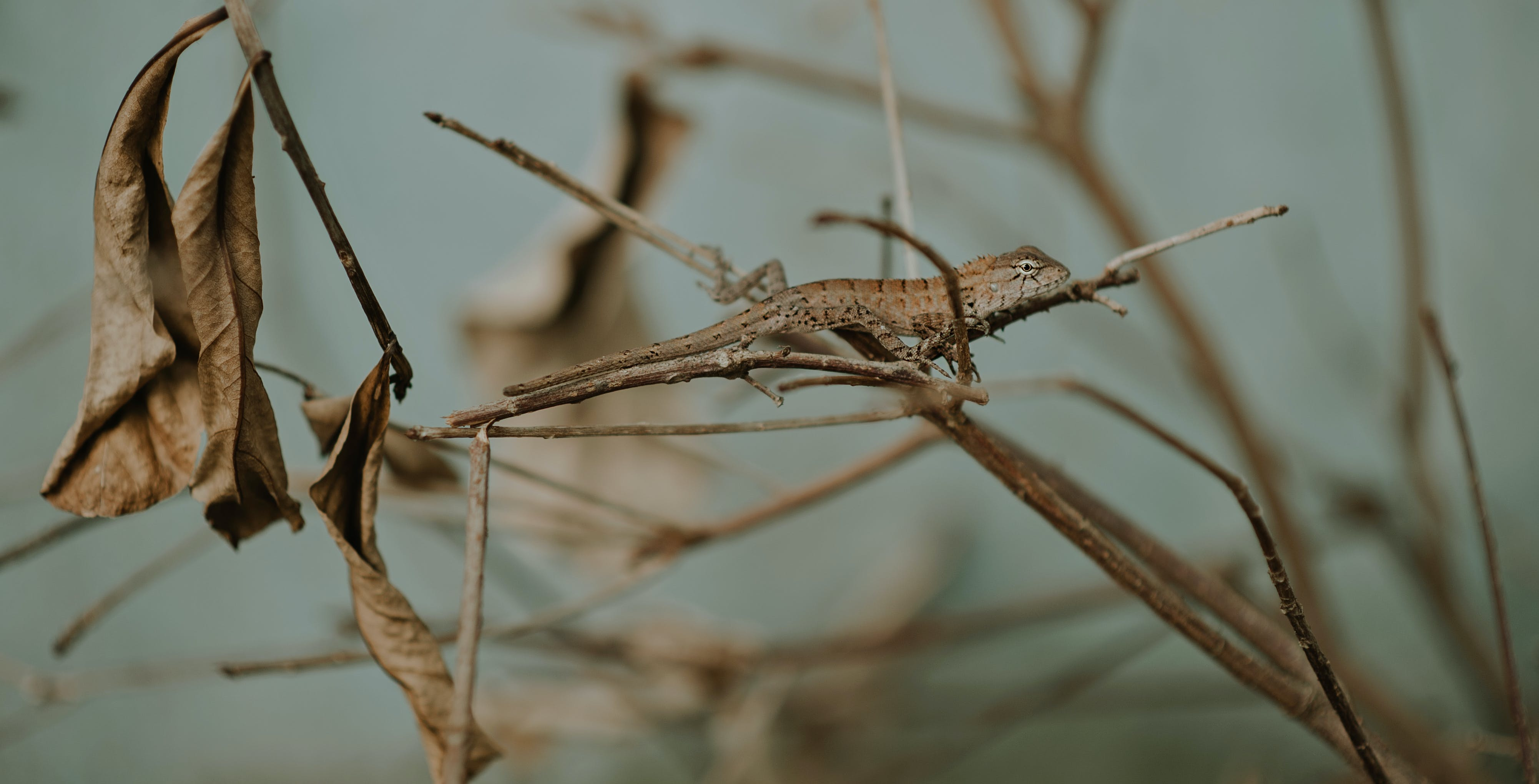 Close-Up Photo of Lizard On Steam
