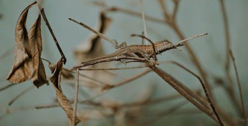 蜥蜴在蒸汽上的特写照片