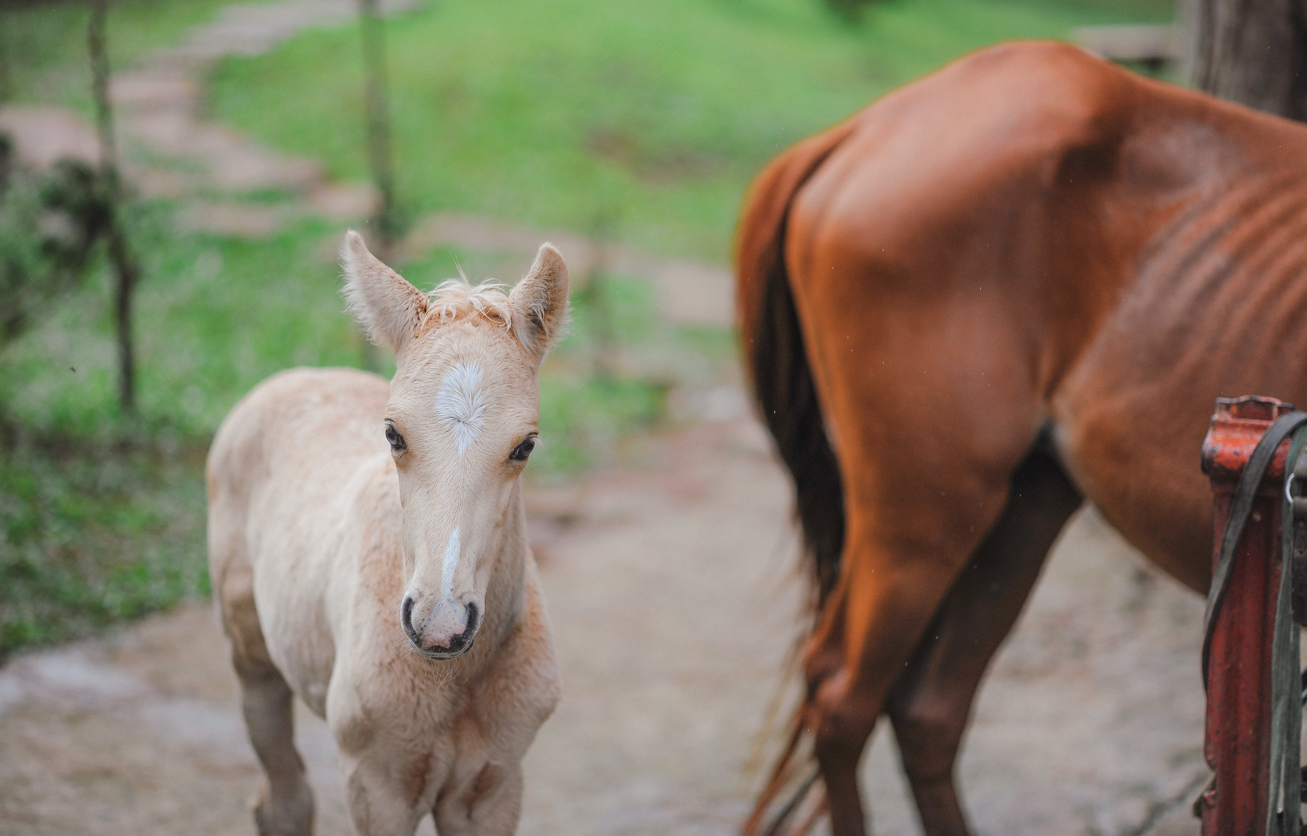 Selective Focus Photography Of Pony