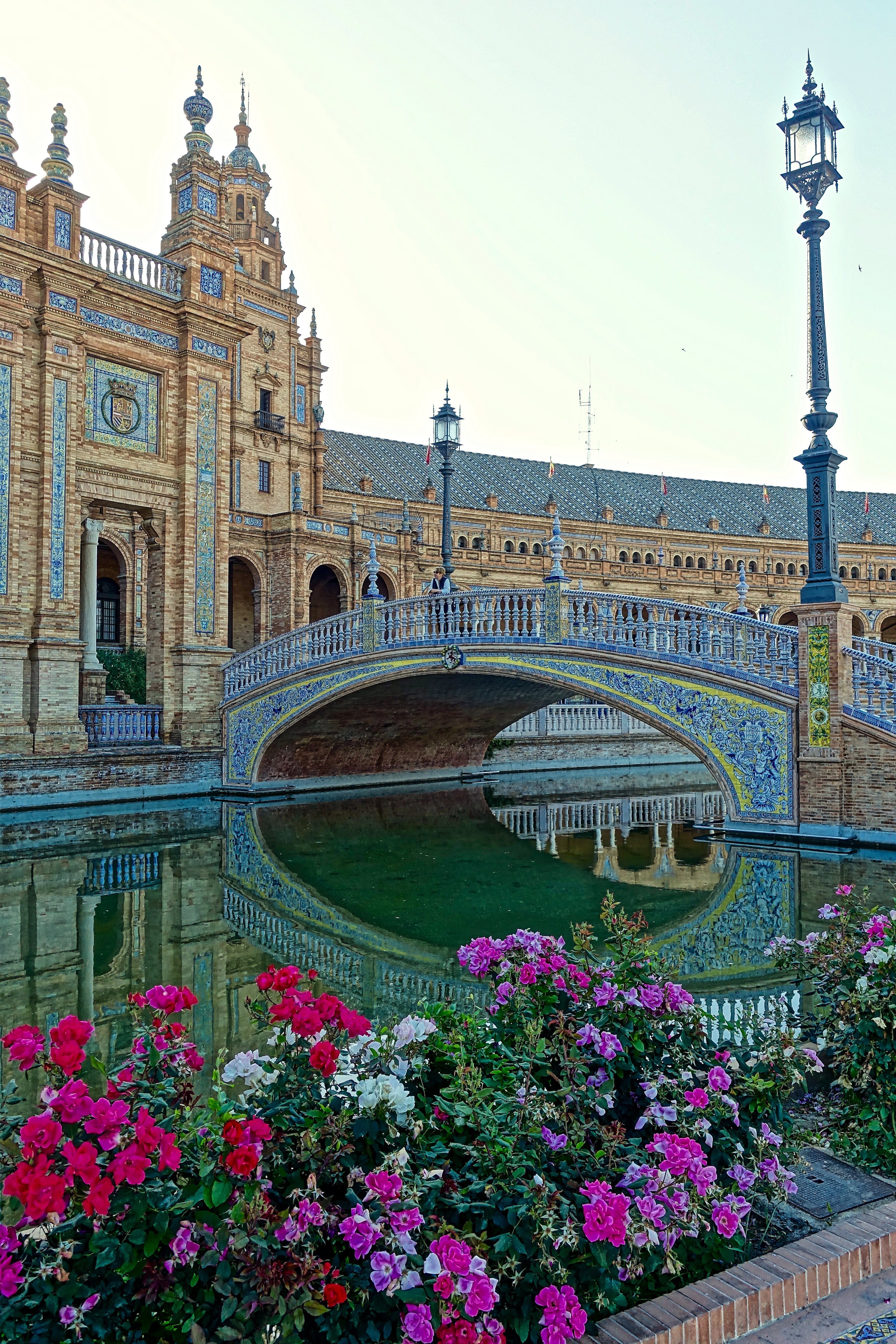 Free stock photo of flowers, building, architecture, Seville