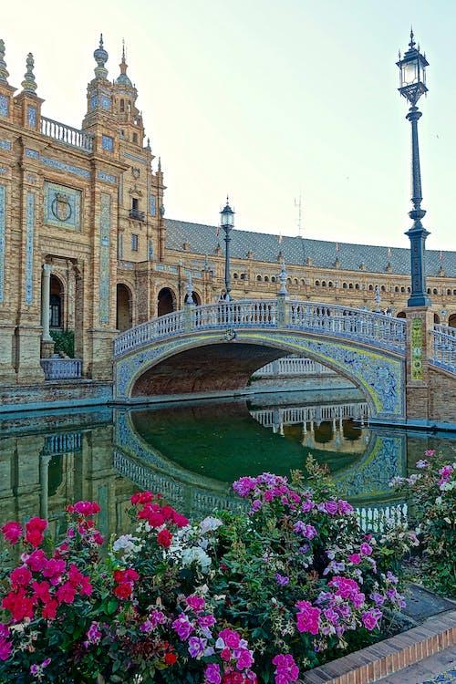 Fotos de stock gratuitas de arquitectura, edificio, flores, plaza de espania