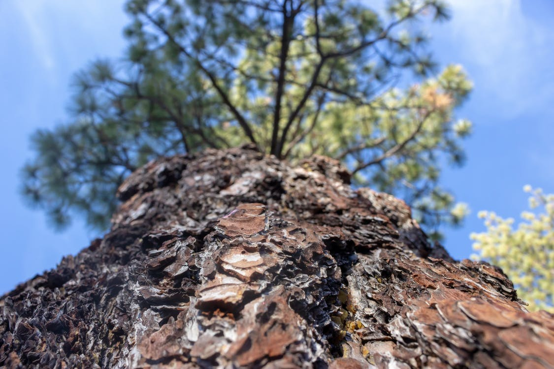Free stock photo of bark, blur, nature