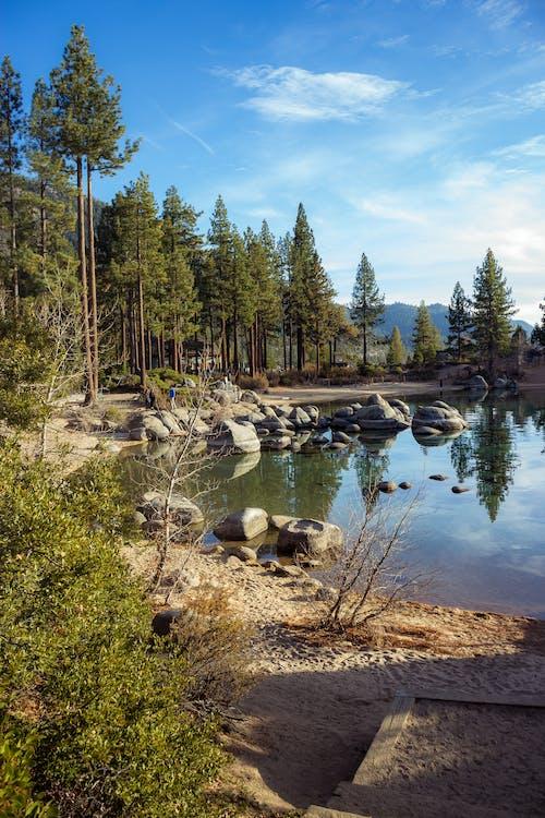 Бесплатное стоковое фото с бухта, вода, гора, деревья