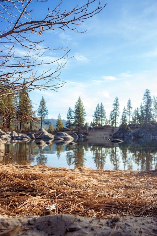 Photos gratuites de arbres, cailloux, ciel, eau