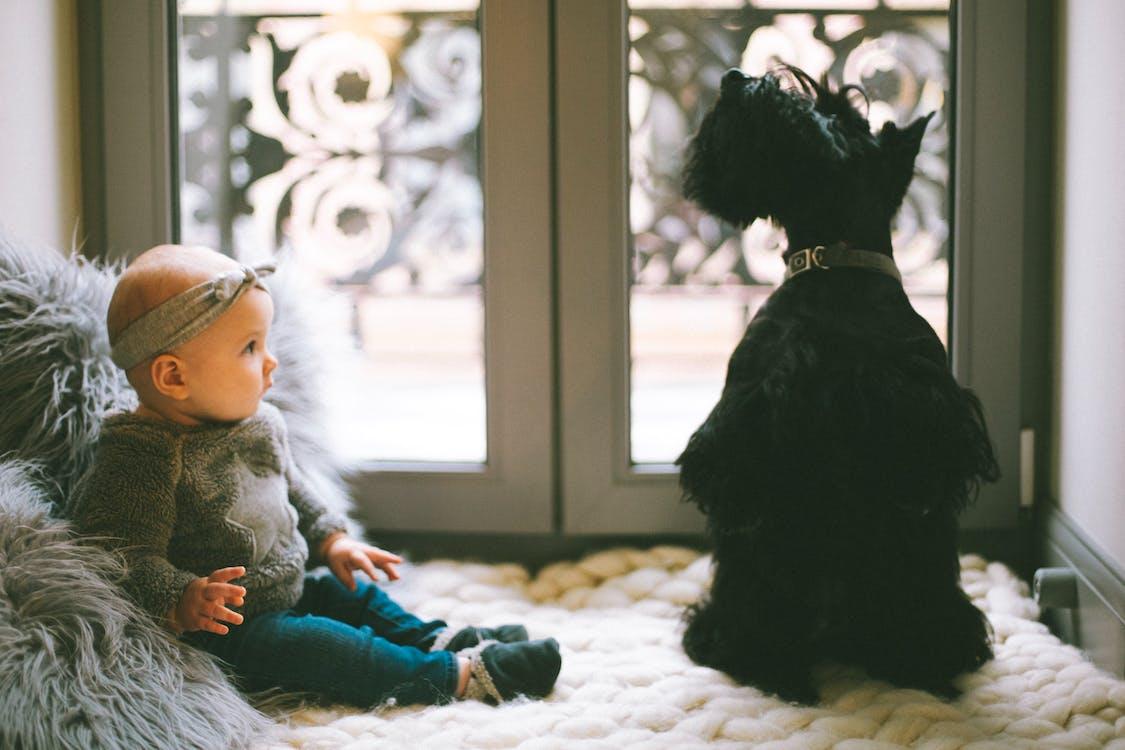 Baby Beside Scottish Terrier