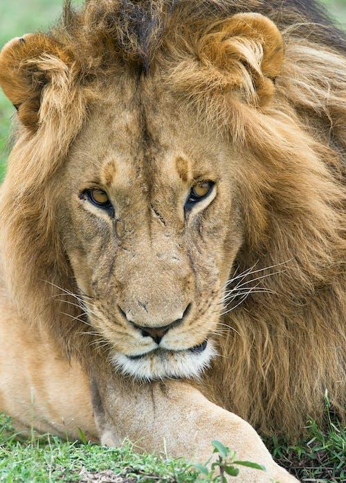 Základová fotografie zdarma na téma divočina, divoké zvíře, divoký, fotografování zvířat
